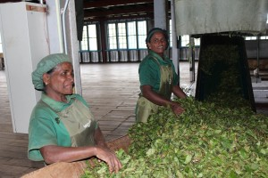 workers @ Halpewatte Tea Factory